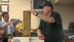 Honey demonstration 1